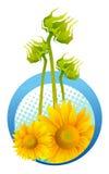 słonecznika piękny kolor żółty Zdjęcia Stock