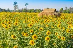 słonecznika pole z budą Obrazy Royalty Free