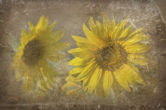 słoneczniki obrazy stock