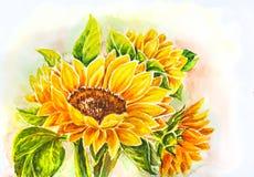 Słoneczniki. ilustracja wektor