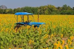 Słoneczniki i ciągnik Fotografia Royalty Free