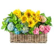 Słoneczniki i hortensia okwitnięcia świeże kwiaty Obraz Royalty Free