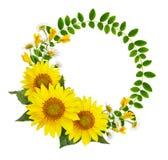 Słoneczniki, stokrotki, akacja kwiaty i zieleń liście w rou, obraz stock
