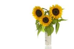 Słoneczniki w marmurowej wazie i odizolowywający w bielu Obrazy Stock