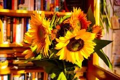 Słoneczniki w nauce obrazy stock