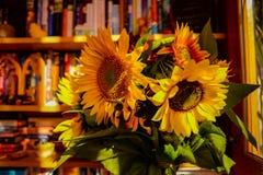 Słoneczniki w nauce zdjęcie royalty free