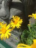 Słonecznikowa pszczoła Obrazy Royalty Free