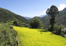 Słonecznikowa uprawia ziemię scena od Środkowego Bhutan Obraz Royalty Free