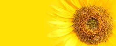 Słonecznikowi zakończenie szczegóły przeciw żółtego sztandaru szerokiego tła makro- fotografii Obrazy Royalty Free
