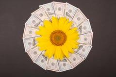 Słonecznikowy kwiat na mandala kalejdoskopie od pieniądze Abstrakcjonistyczny pieniądze tła raster wzoru powtórki mandala okrąg zdjęcie royalty free