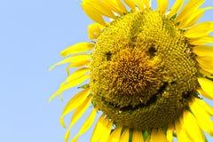 Słonecznikowy uśmiech. Obraz Royalty Free