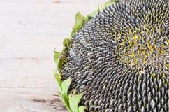 Słonecznikowych ziaren roślina w miejscowym Tajlandia Zdjęcie Stock