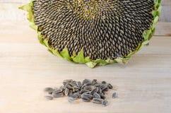 Słonecznikowych ziaren roślina w miejscowym Tajlandia Fotografia Royalty Free