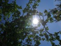 słoneczny dzień Fotografia Royalty Free