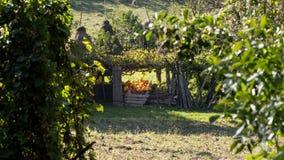 Słoneczny dzień jesień w Rumuńskiej wsi Obrazy Royalty Free
