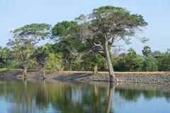 Słoneczny dzień na brzeg antyczny sztuczny rezerwuar Tissa Weva Anuradhapura, Sri Lanka Zdjęcie Stock