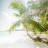 Słoneczny dzień przy zadziwiającą tropikalną plażą z drzewkiem palmowym Zdjęcia Stock