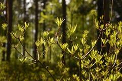 Słoneczny dzień w lesie Zdjęcia Stock