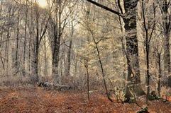 Słoneczny dzień w zima lesie Obrazy Royalty Free
