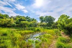 Słoneczny dzień z stawem w lesie fotografia royalty free