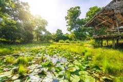 Słoneczny dzień z stawem w lesie obraz royalty free