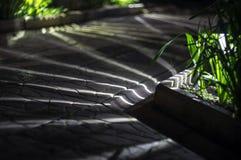 Słoneczny lampionu ogródu światło Obraz Royalty Free