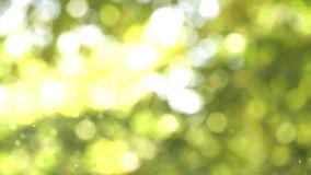 Słoneczny pollen zbiory
