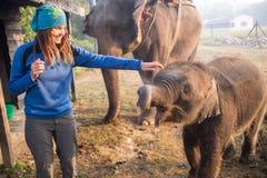 Słoni chodzić Zdjęcia Royalty Free