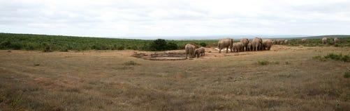 Słonia życia styl w Południowa Afryka Zdjęcia Stock