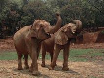 Słonia życie Obraz Stock