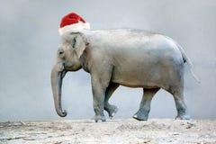 Słonia afrykanina zwierzę Zdjęcie Royalty Free