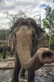 Słonia bagażnika zakończenie strzelający przy zoo Fotografia Royalty Free