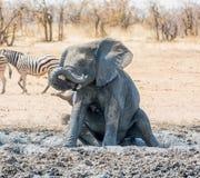 Słonia Borowinowy skąpanie Zdjęcia Stock