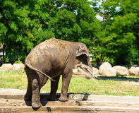 Słonia chełbotanie z wodą Zdjęcie Stock