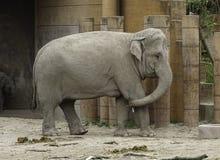 Słonia chrobot na poczta fotografia stock