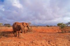 Słonia dziecko z matką w Afryka Tsavo parku narodowym Obrazy Royalty Free