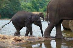 Słonia dziecko z matką w skąpaniu Obrazy Royalty Free
