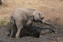 słonia kąpielowy błoto Obraz Stock