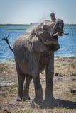 Słonia miotania pył nad ramieniem obok rzeki Zdjęcia Royalty Free