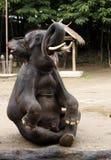 słonia obsiadanie fotografia royalty free