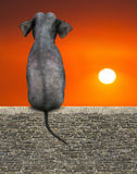 Słonia obsiadanie, wschód słońca, zmierzch, natura ilustracja wektor