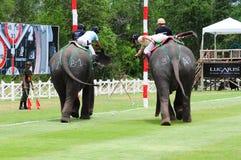 Słonia Polo obraz stock