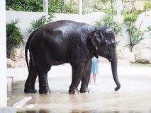 Słonia przedstawienia dzienniczka kąpania prysznic Obraz Stock