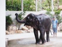 Słonia przedstawienia dzienniczka kąpania prysznic Zdjęcie Stock