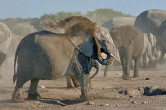 Słonia pyłu skąpanie w Etosha parku narodowym, Namibia Obraz Stock