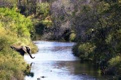 słonia riverscene fotografia stock
