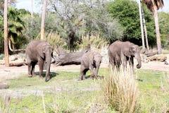 Słoń rodzina Zdjęcia Stock