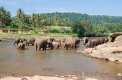 Słonia skąpanie Obrazy Royalty Free