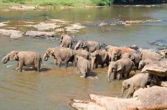 Słonia skąpanie 2 Zdjęcia Stock