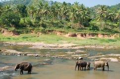 Słonia skąpanie 3 Zdjęcie Royalty Free